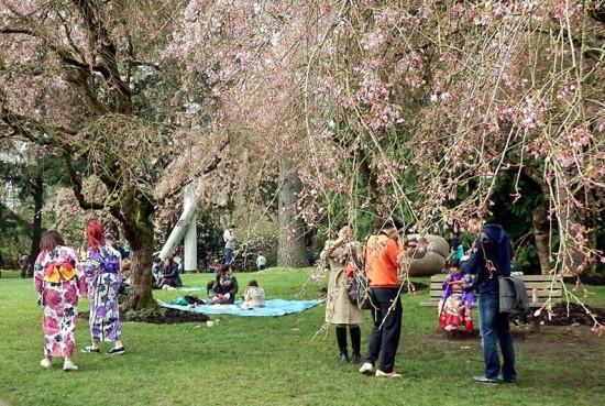 Sakura Day Japan Fair