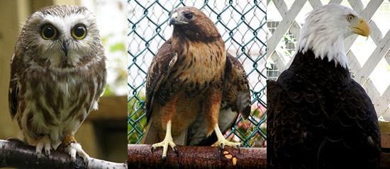 OWL Spring Open House