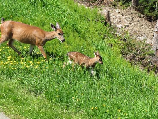 wildlife in vancouver