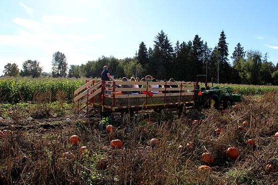 Bose Corn Maze and Pumpkin Patch