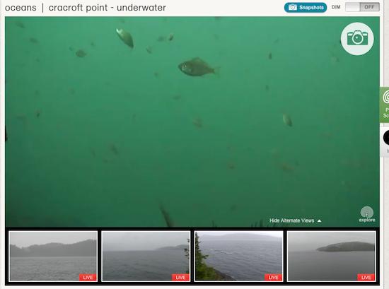 Screenshot from explore.org
