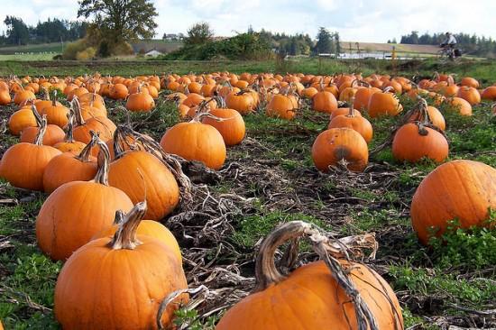 pumpkin patch vancouver
