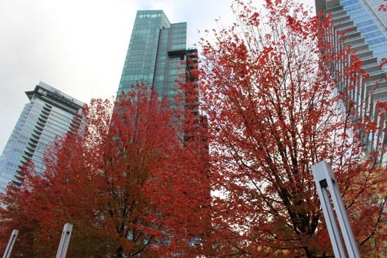 Fall Colours Vancouver Art Walk