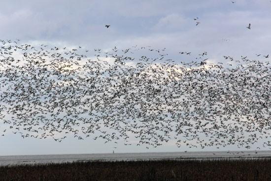 George C. Reifel Migratory Bird Sanctuary Vancouver