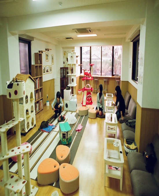 A cat cafe in Japan. Photo credit: sprklg | Wikipedia