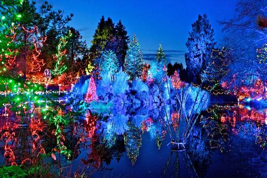 Vandusen Dancing Lights 550x367 - Van Dusen Gardens Christmas Lights 2019