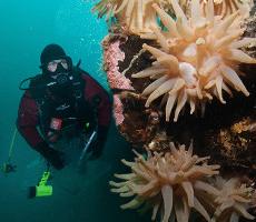 Diver's Weekend