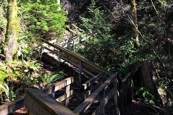 Discover-Outdoors-Lynn-Canyon3