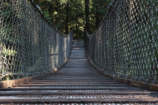 Discover-Outdoors-Lynn-Canyon6