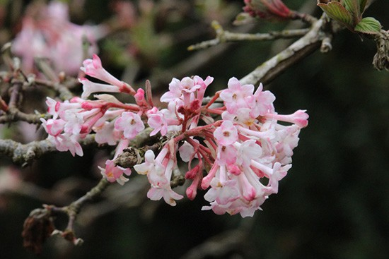 Discover-Outdoors-Spring8