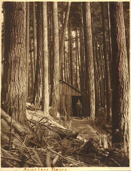 "Ben W. Leeson, ""Alice Lake Timber,"" c.1890, hand-tinted gelatin silver print (UL#1079) 