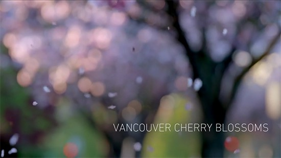 cherry-video