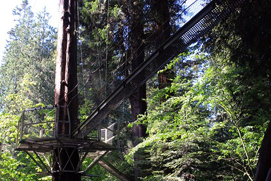 Discover Outdoors Greenheart TreeWalk4