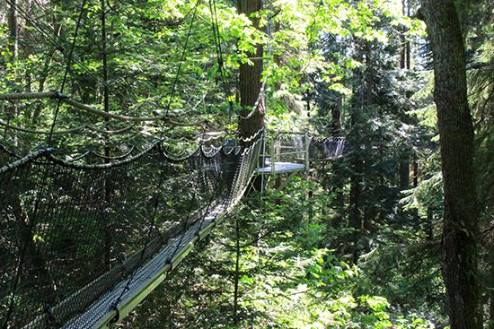 Discover Outdoors Greenheart TreeWalk8