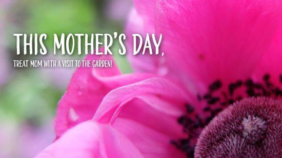 Mother's Day at VanDusen Botanical Garden