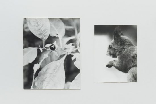 Field Guide by Jochen Lempert
