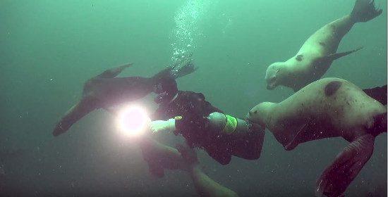 scuba-diving-sea-lions