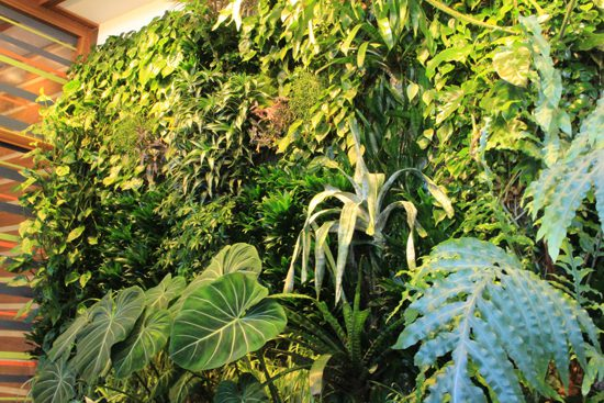 Discover Outdoors Living Walls Tourism Vancouver - Totems