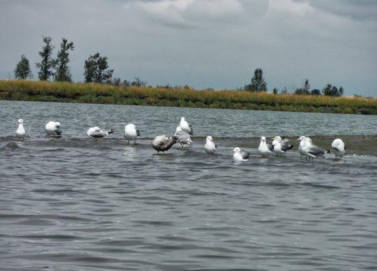 Discover Outdoors Kayak Deas 4
