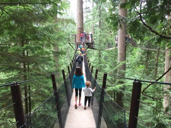 Treetops Adventure | Photo: Bianca Bujan