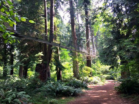 Greenheart TreeWalk | Photo: Bianca Bujan