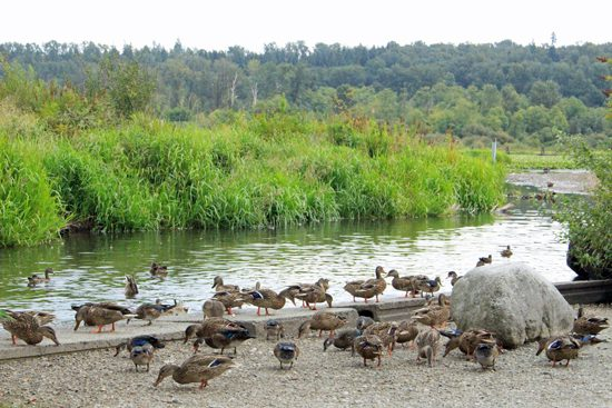 burnaby-lake-park-discover-the-outdoors11