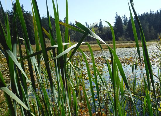 beaver-lake-stanley-park-discover-the-outdoors2
