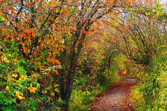 Reifel Bird Sanctuary   Photo: Ann Hung (Flickr)