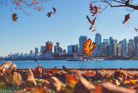 Falling Leaves   Photo: Sonika Arora 604 (Flickr)