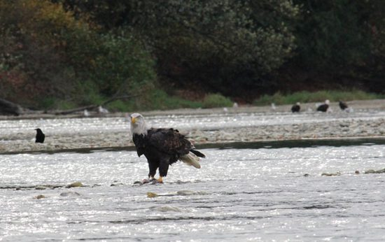 harrison-river-salmon-run-discover-the-outdoors6