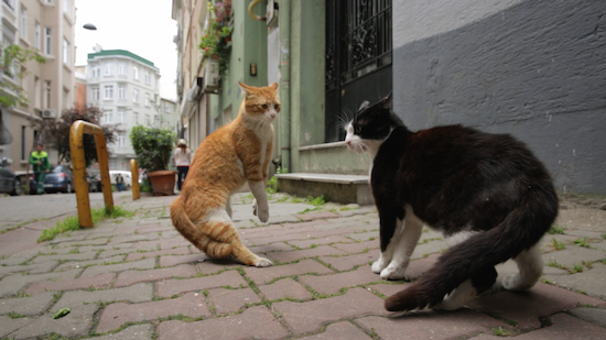 A tense scene from the Turkish documentary Kedi.