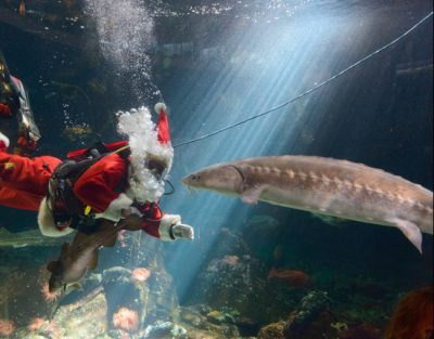 Scuba Claus | Photo: Vancouver Aquarium