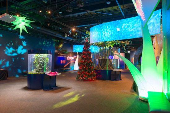 Eel-lectric Lights   Photo: Vancouver Aquarium