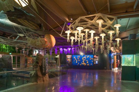 Origami Jellyfish Lights   Photo: Vancouver Aquarium