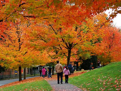 Under the Boardwalk – Deer Lake Park