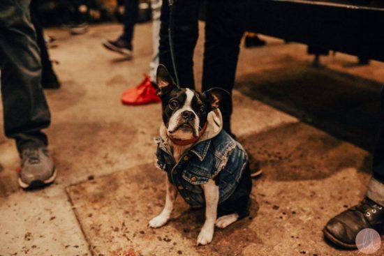 eastside flea dogs