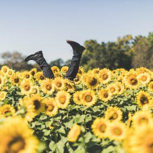 vancouver sunflower festival 2018