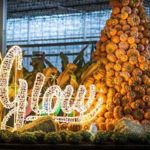 Harvest Glow Vancouver 2018