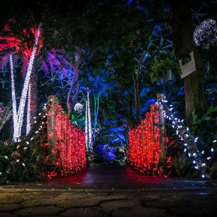 bloedel conservatory holiday heights