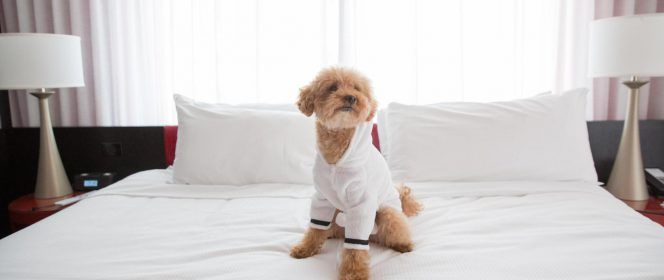 dog friendly Vancouver hotel
