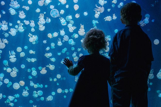 A child watches the jellyfish at the Vancouver Aquarium
