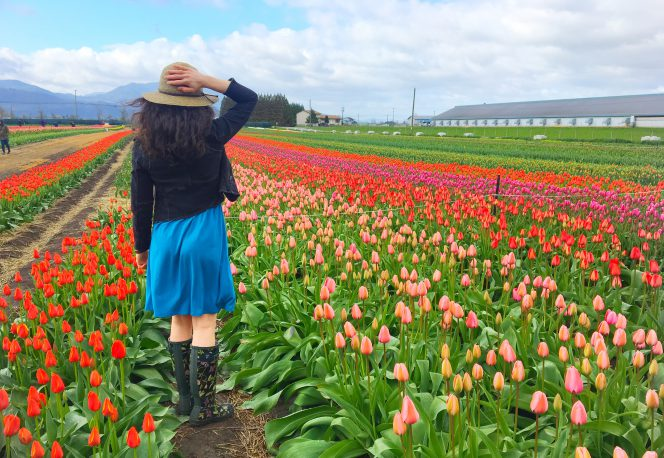 tulipds abbotsford vancouver