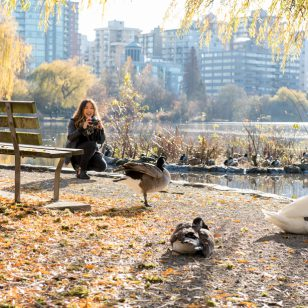 A woman taking photos of ducks, geese and swans at Lost Lagoon in Stanley Park, Vancouver, BC