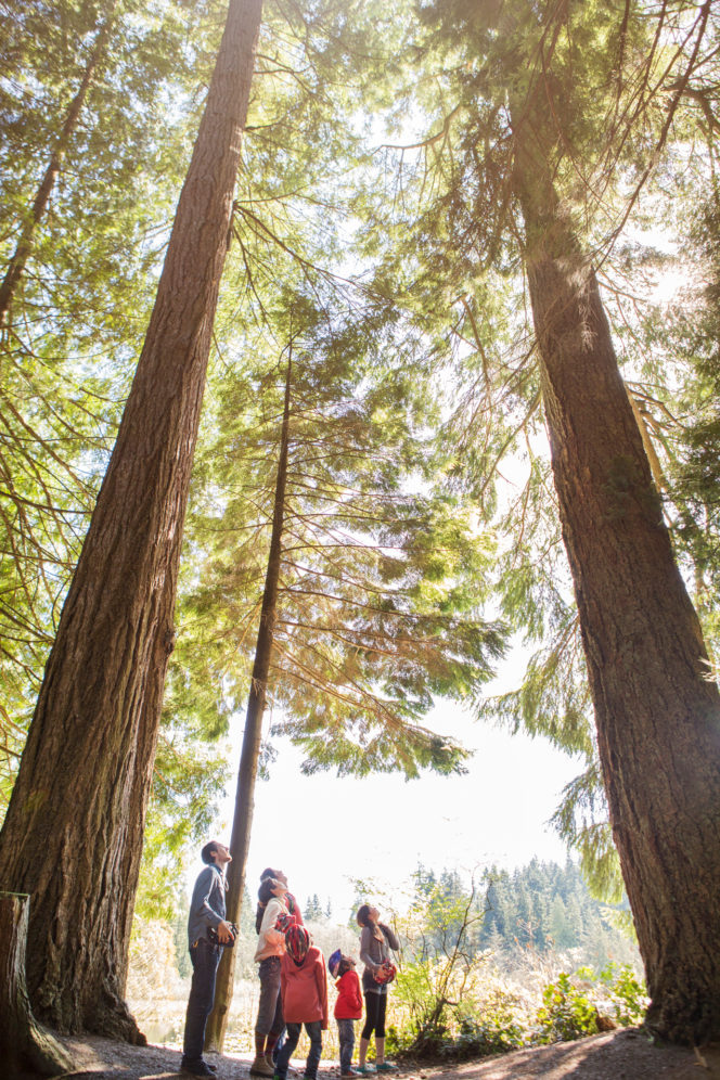 A family looks up at a very tall tree in Vancouver's Stanley Park