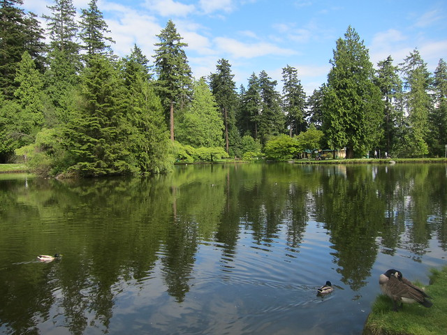 Lower Pond at Central Park in Burnaby, BC