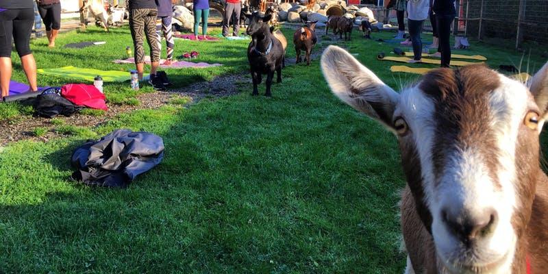 goat yoga vancouver