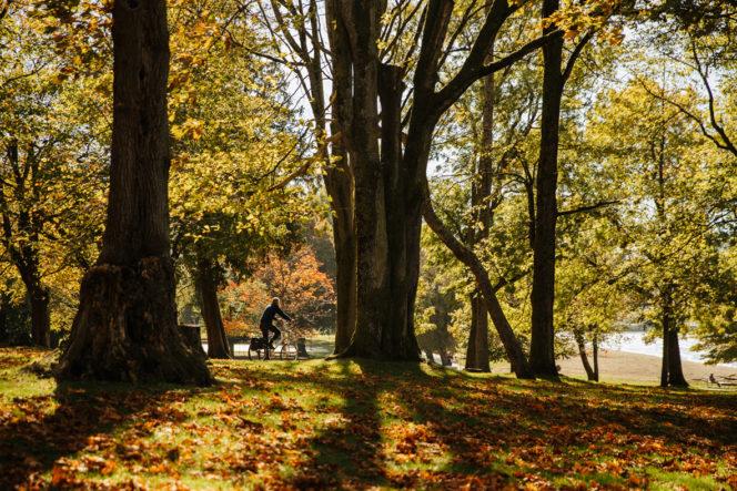 Biking in past fall leaves in Vancouver's Kitislano neighbourhood