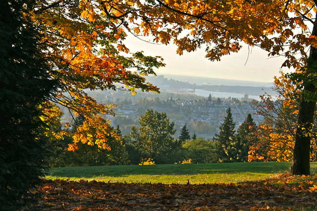 Fall colours at Burnaby Mountain near Vancouver