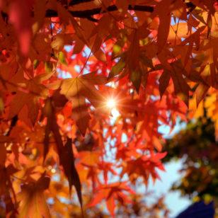 autumn vancouver