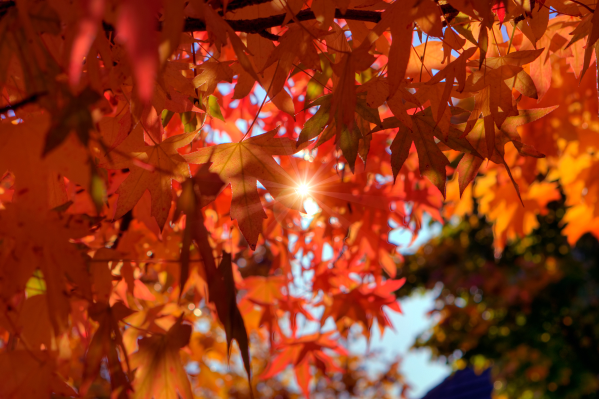 5 Cozy Ways to Celebrate the Autumn Equinox - Inside Vancouver Blog
